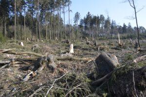 Beispiel für zerstörte Waldflächen am Winterstein